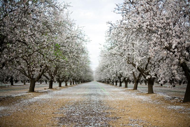 Blossom Trail 2