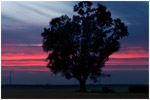 Madera Sunset
